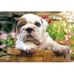 Puzzle Educa - The Baby Bulldog, 500 piese, include lipici puzzle (13759)